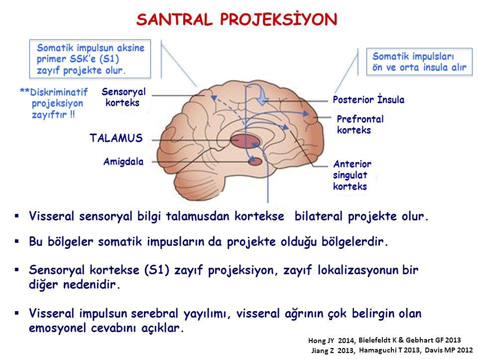 SANTRAL PROJEKSİYON Somatik impulsun aksine. primer SSK'e (S1) zayıf projekte olur. Somatik impulsları.