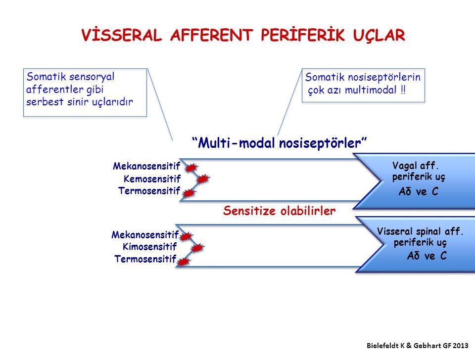 VİSSERAL AFFERENT PERİFERİK UÇLAR