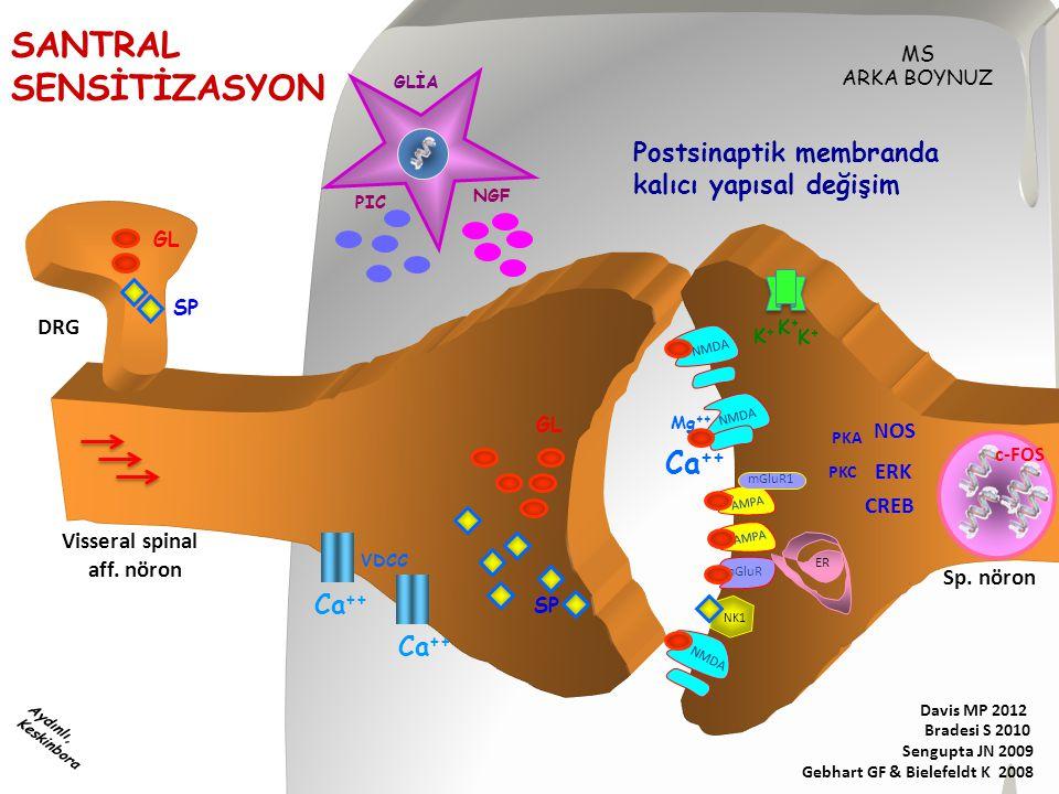 SANTRAL SENSİTİZASYON Ca++ Postsinaptik membranda
