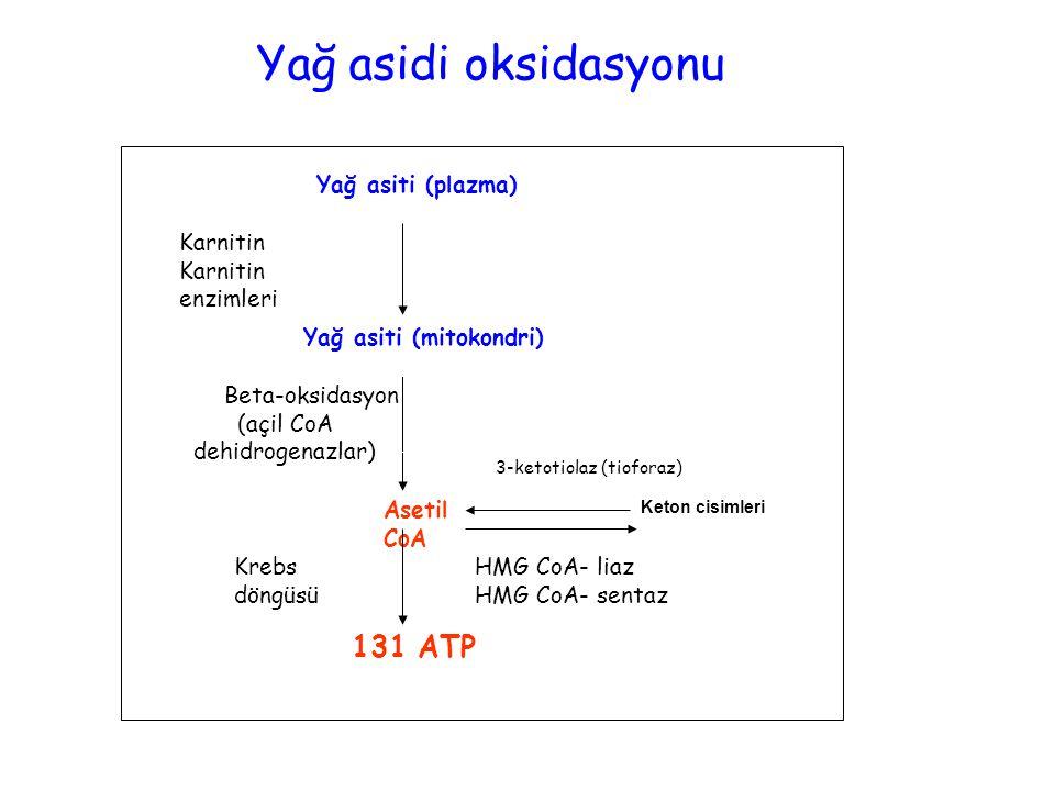 (açil CoA dehidrogenazlar)