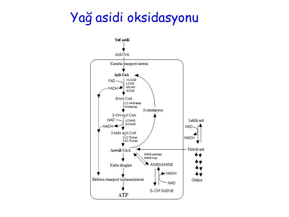 Yağ asidi oksidasyonu