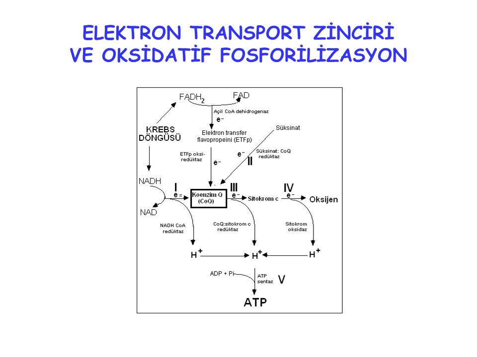 ELEKTRON TRANSPORT ZİNCİRİ VE OKSİDATİF FOSFORİLİZASYON