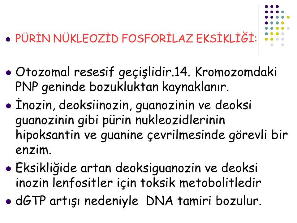 dGTP artışı nedeniyle DNA tamiri bozulur.
