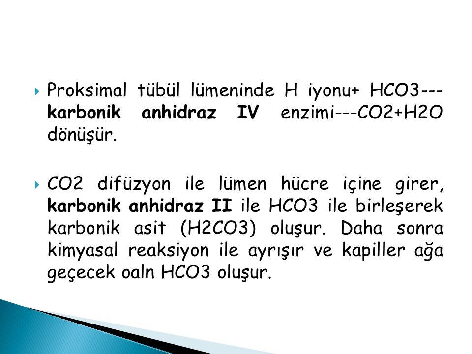 Proksimal tübül lümeninde H iyonu+ HCO3--- karbonik anhidraz IV enzimi---CO2+H2O dönüşür.