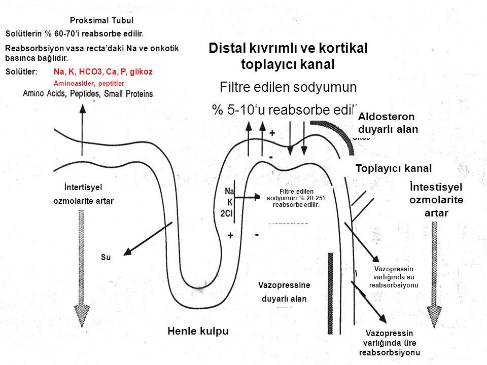 Distal kıvrımlı ve kortikal toplayıcı kanal Filtre edilen sodyumun