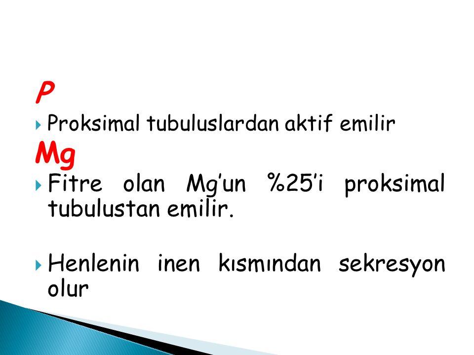 P Mg Fitre olan Mg'un %25'i proksimal tubulustan emilir.