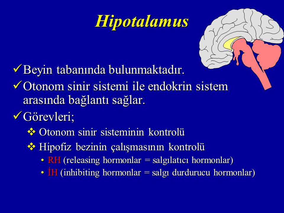 Hipotalamus Beyin tabanında bulunmaktadır.