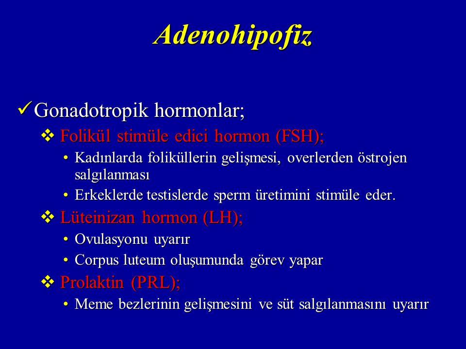 Adenohipofiz Gonadotropik hormonlar;