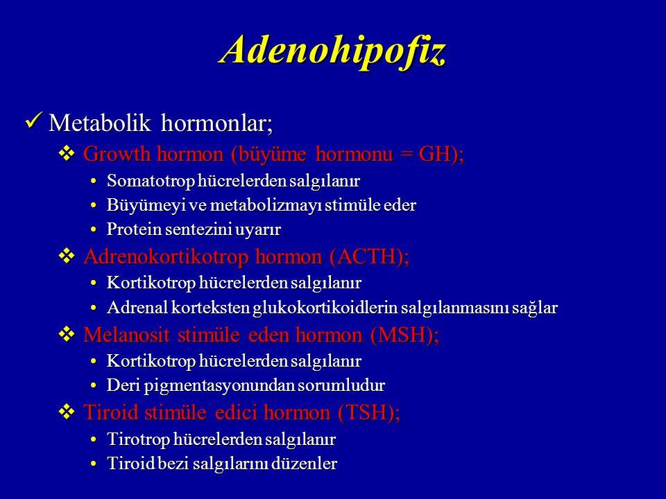 Adenohipofiz Metabolik hormonlar; Growth hormon (büyüme hormonu = GH);