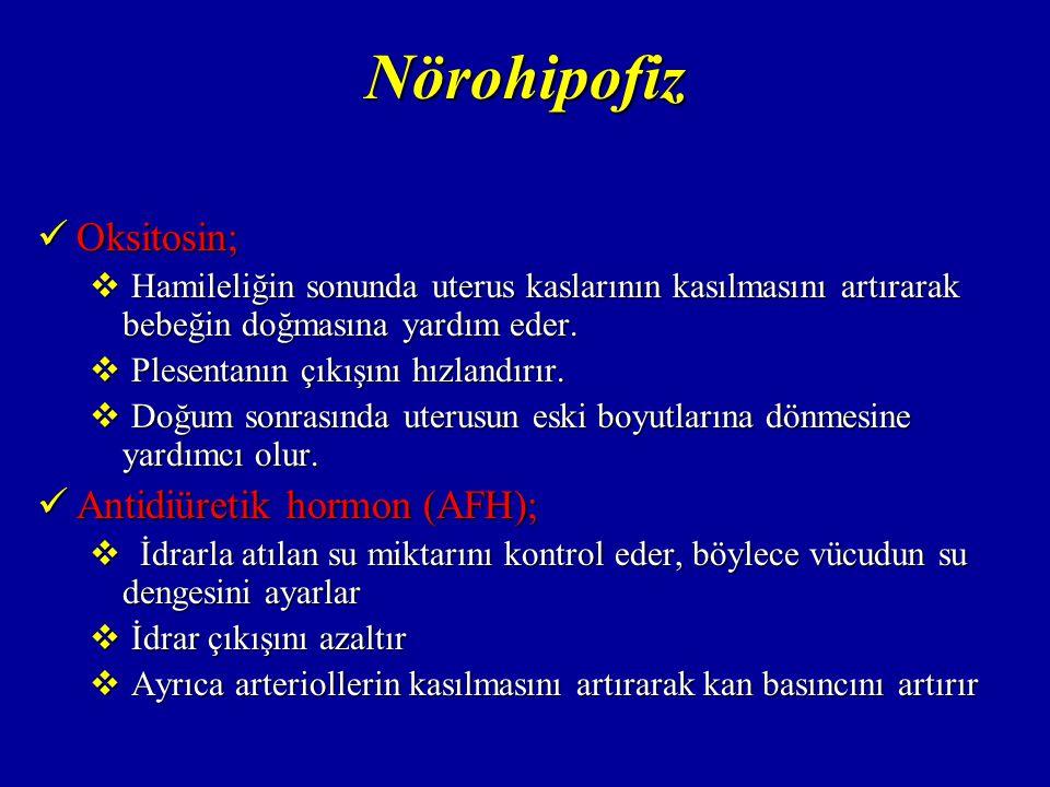 Nörohipofiz Oksitosin; Antidiüretik hormon (AFH);
