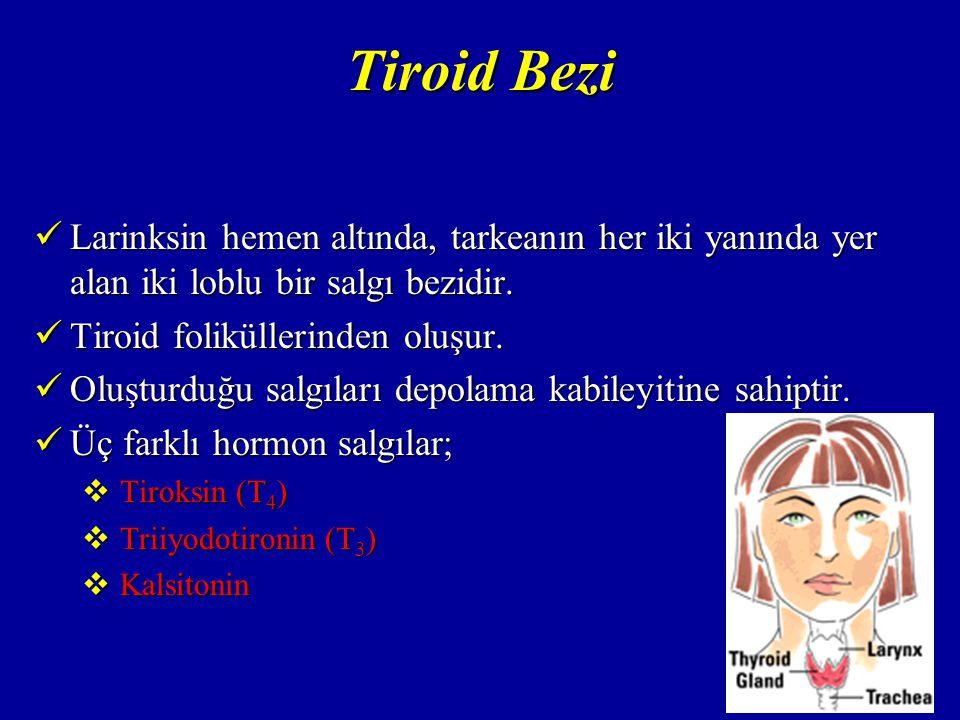 Tiroid Bezi Larinksin hemen altında, tarkeanın her iki yanında yer alan iki loblu bir salgı bezidir.