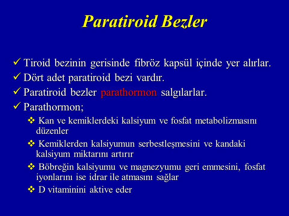 Paratiroid Bezler Tiroid bezinin gerisinde fibröz kapsül içinde yer alırlar. Dört adet paratiroid bezi vardır.