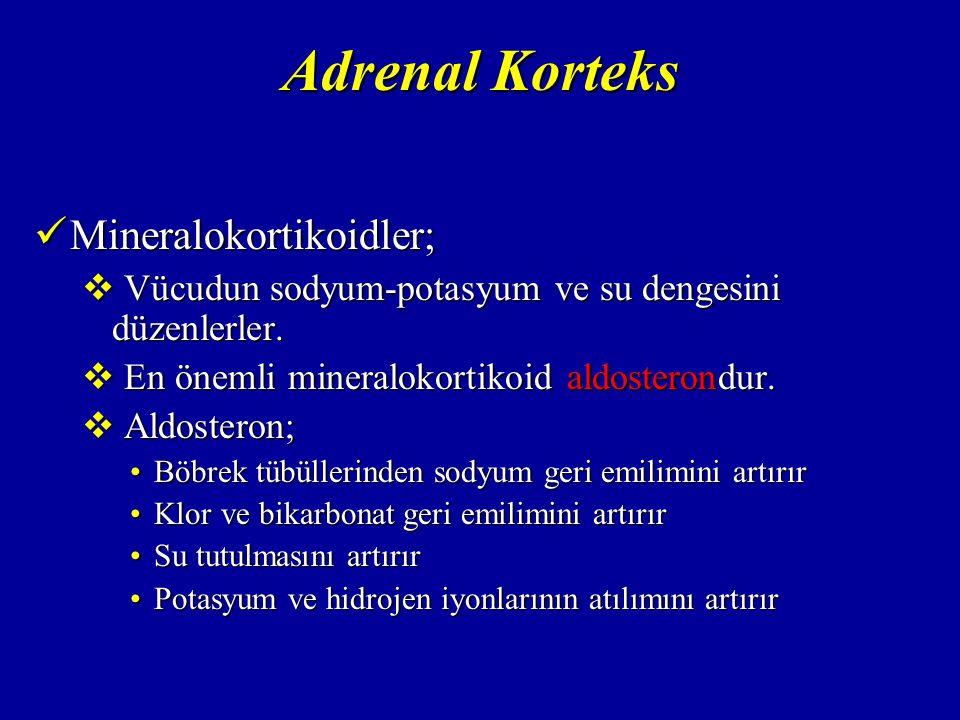 Adrenal Korteks Mineralokortikoidler;