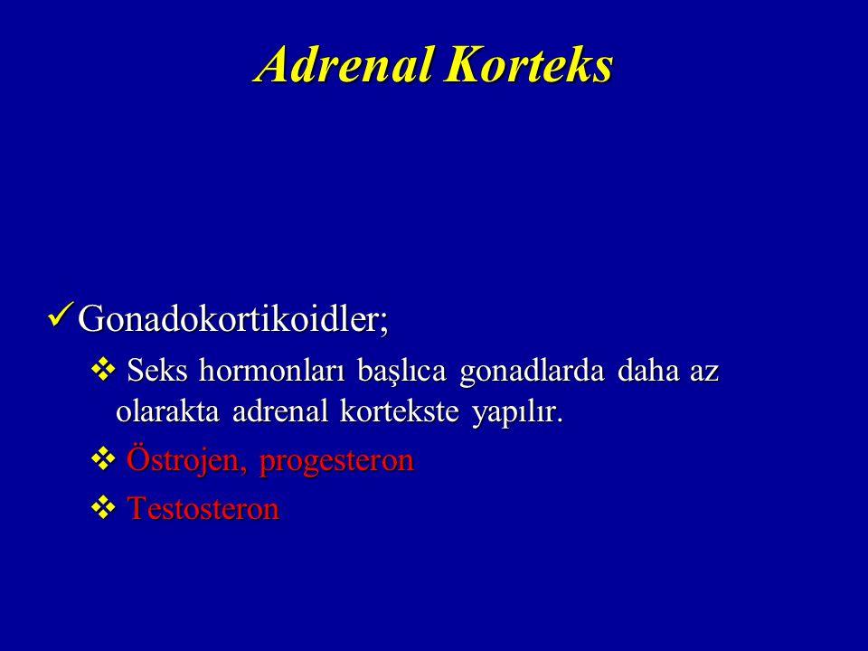 Adrenal Korteks Gonadokortikoidler;