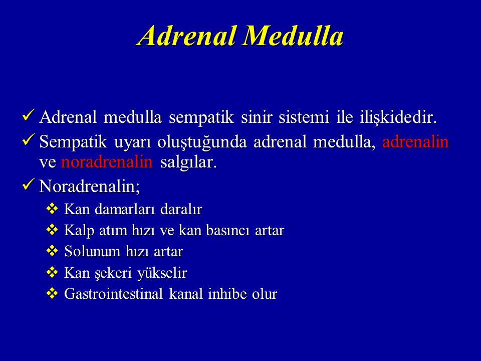 Adrenal Medulla Adrenal medulla sempatik sinir sistemi ile ilişkidedir.