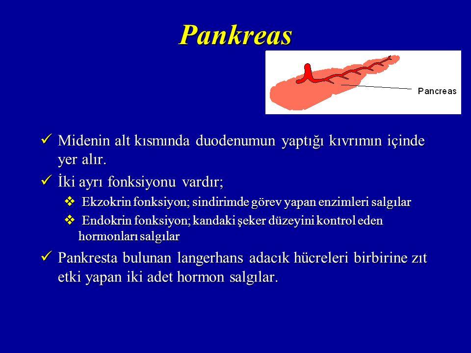 Pankreas Midenin alt kısmında duodenumun yaptığı kıvrımın içinde yer alır. İki ayrı fonksiyonu vardır;