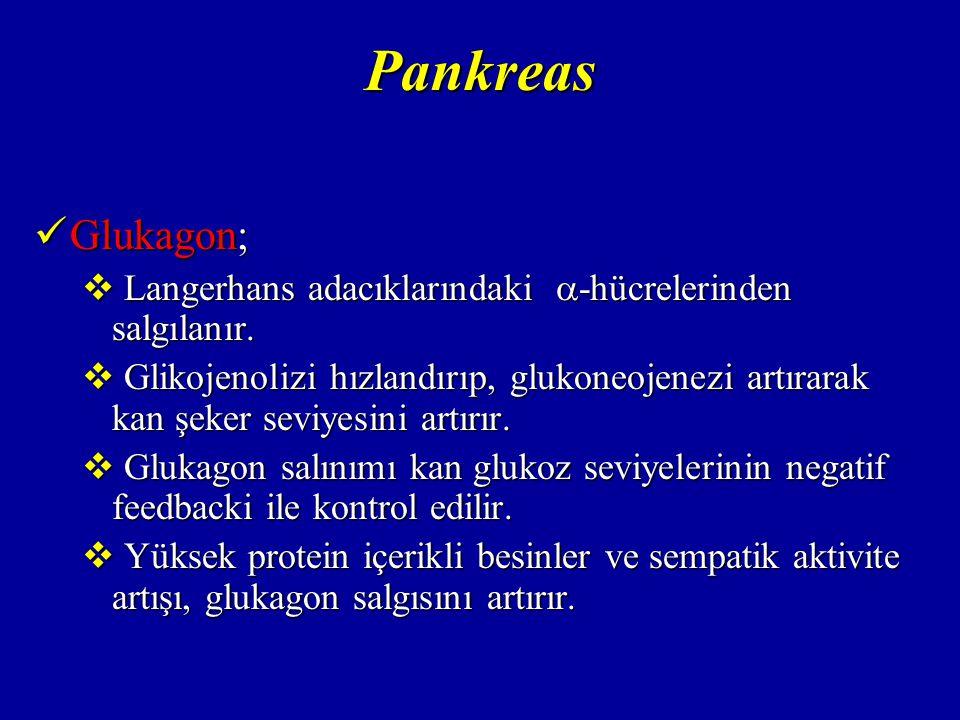 Pankreas Glukagon; Langerhans adacıklarındaki -hücrelerinden salgılanır.