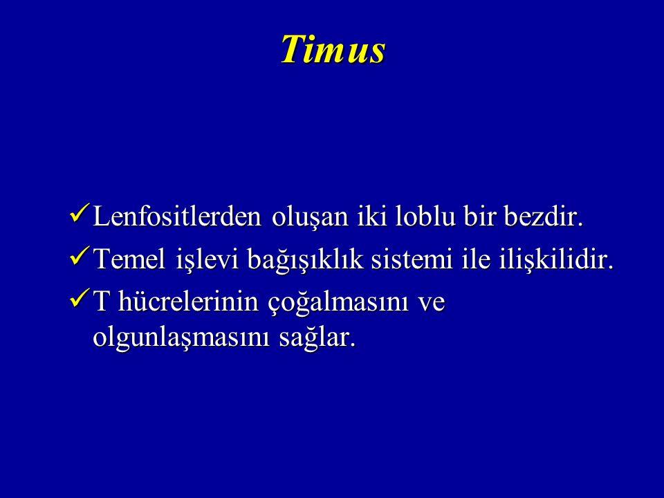 Timus Lenfositlerden oluşan iki loblu bir bezdir.