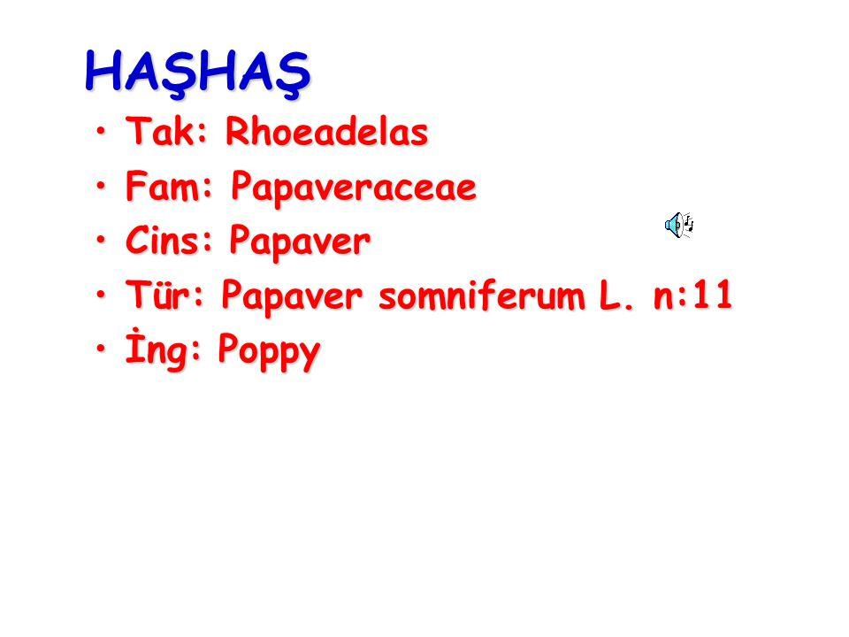 HAŞHAŞ Tak: Rhoeadelas Fam: Papaveraceae Cins: Papaver