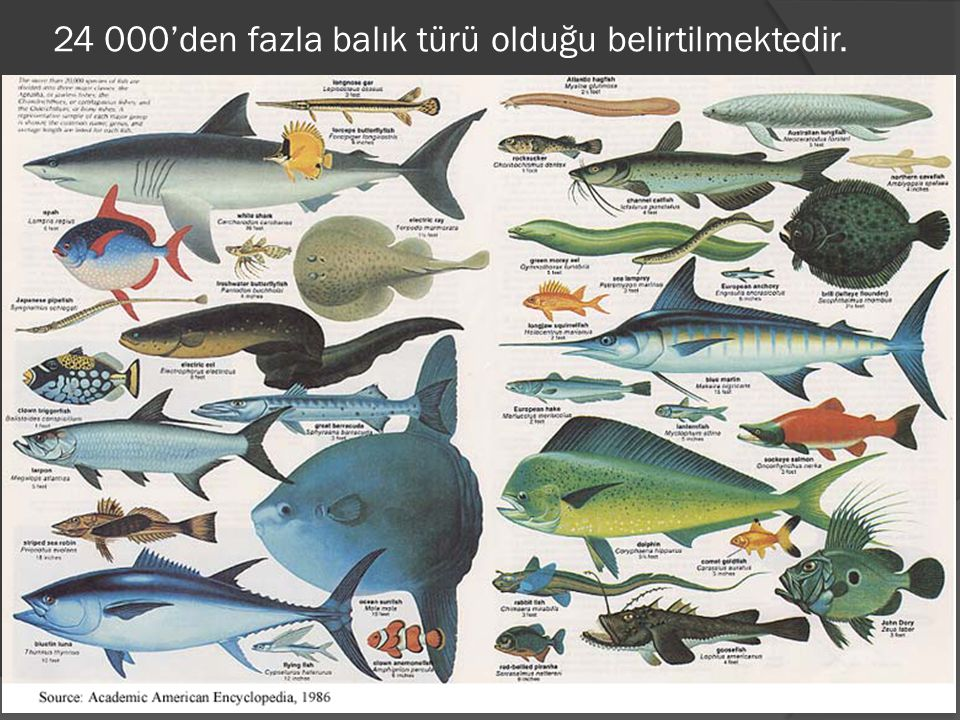 24 000'den fazla balık türü olduğu belirtilmektedir.