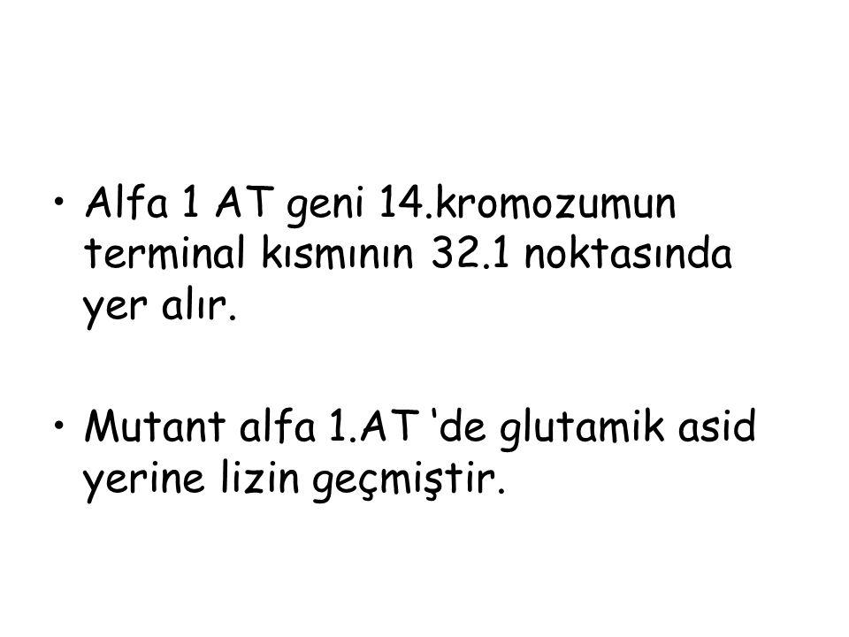 Alfa 1 AT geni 14. kromozumun terminal kısmının 32