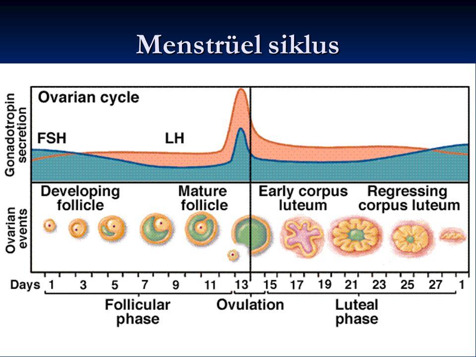 Menstrüel siklus 18