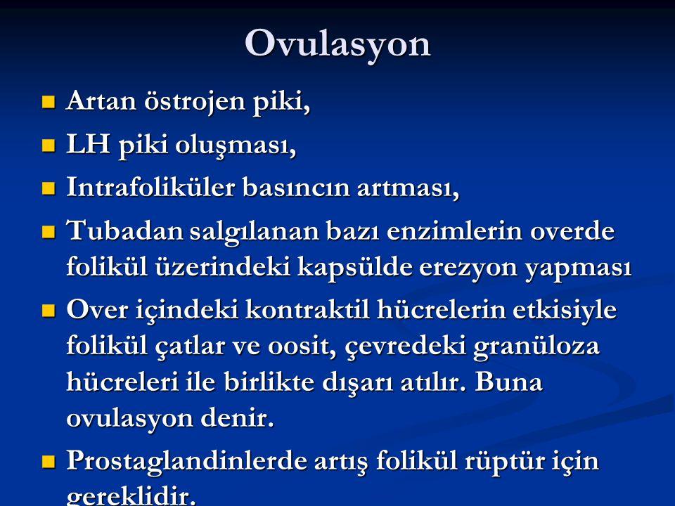 Ovulasyon Artan östrojen piki, LH piki oluşması,