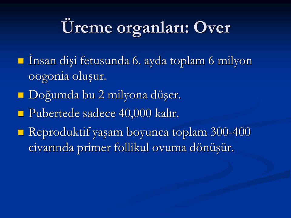 Üreme organları: Over İnsan dişi fetusunda 6. ayda toplam 6 milyon oogonia oluşur. Doğumda bu 2 milyona düşer.
