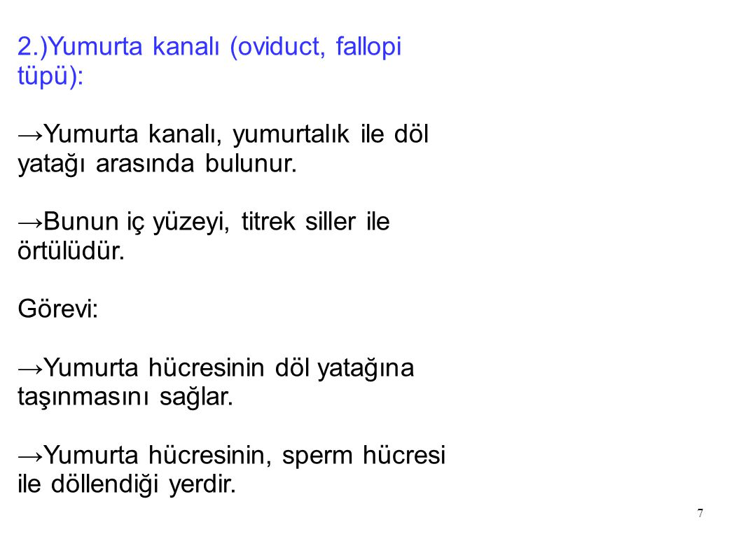 2.)Yumurta kanalı (oviduct, fallopi tüpü):