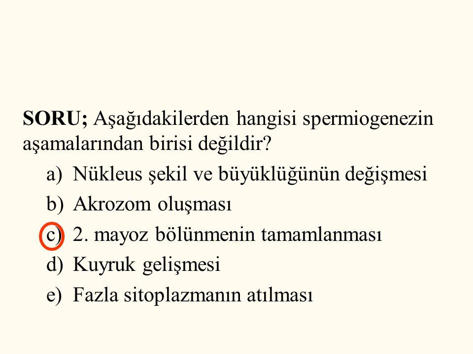 SORU; Aşağıdakilerden hangisi spermiogenezin aşamalarından birisi değildir