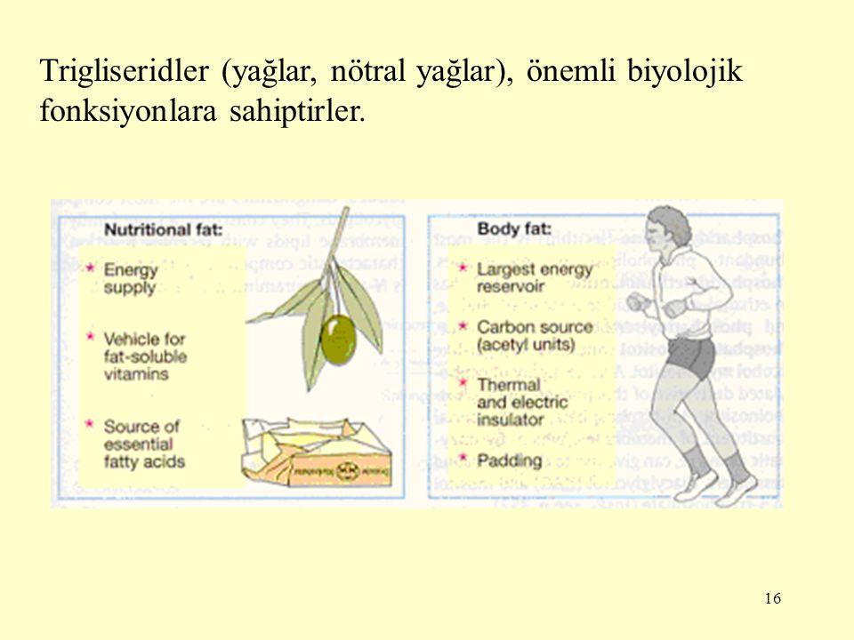 Trigliseridler (yağlar, nötral yağlar), önemli biyolojik fonksiyonlara sahiptirler.