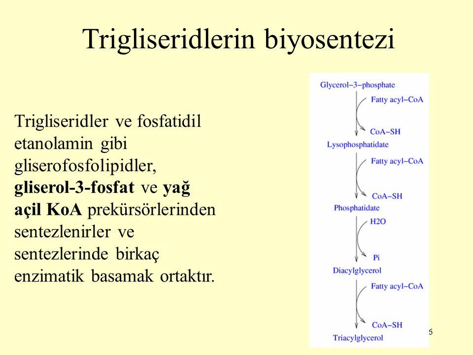 Trigliseridlerin biyosentezi