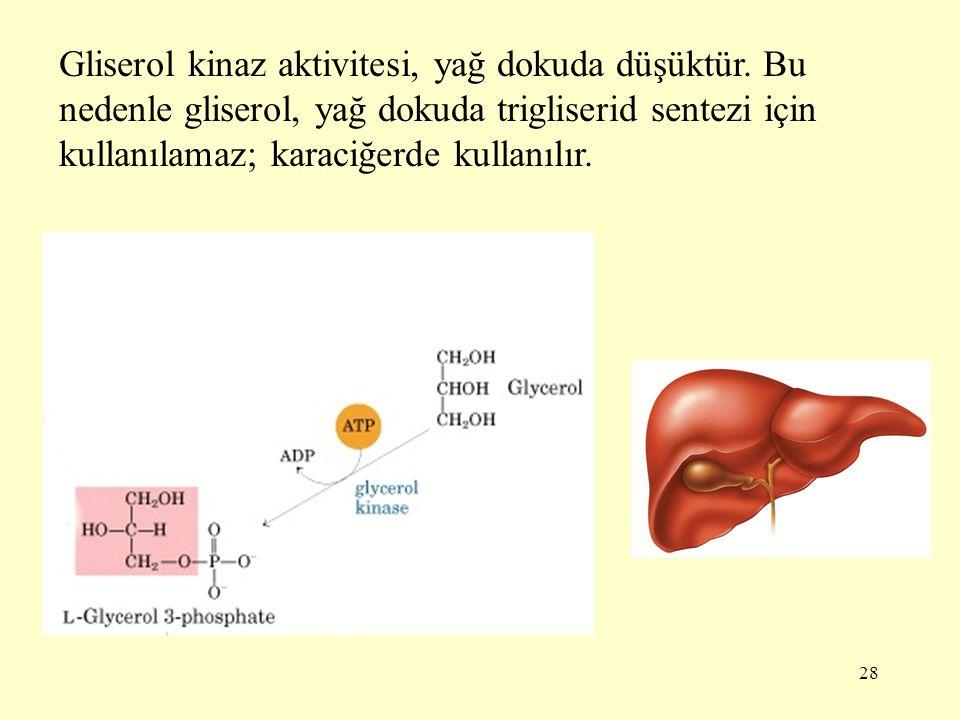 Gliserol kinaz aktivitesi, yağ dokuda düşüktür