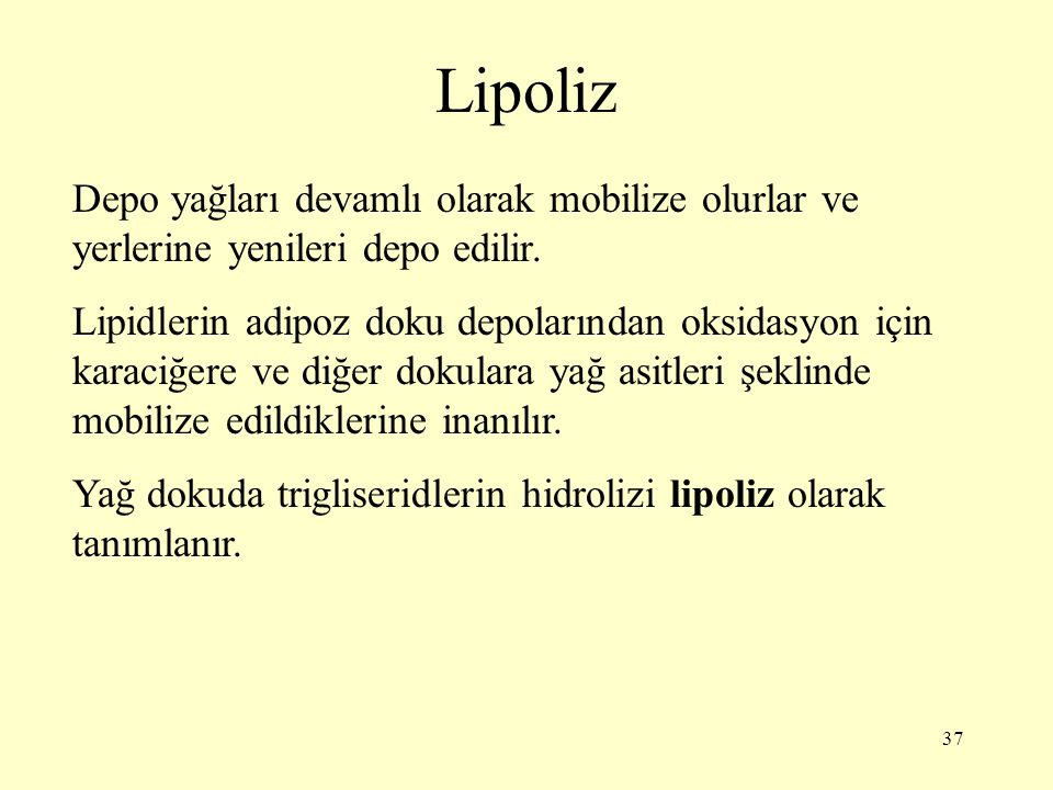 Lipoliz Depo yağları devamlı olarak mobilize olurlar ve yerlerine yenileri depo edilir.