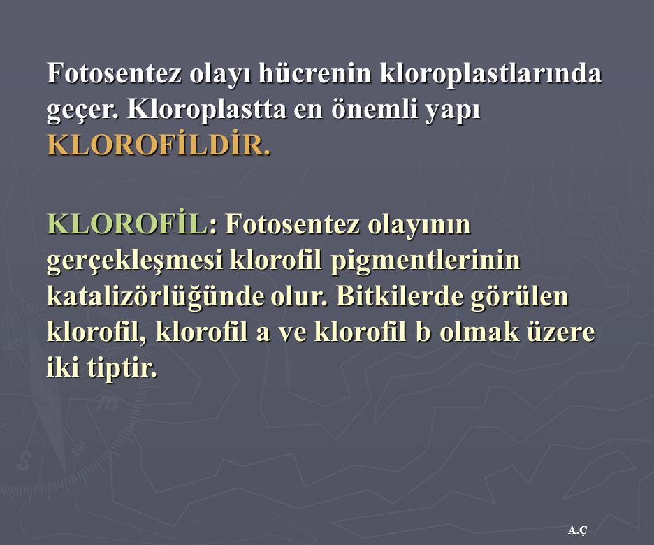 Fotosentez olayı hücrenin kloroplastlarında geçer