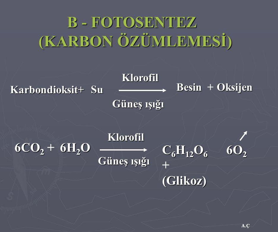 (KARBON ÖZÜMLEMESİ) B - FOTOSENTEZ 6H2O C6H12O6 + (Glikoz) 6O2