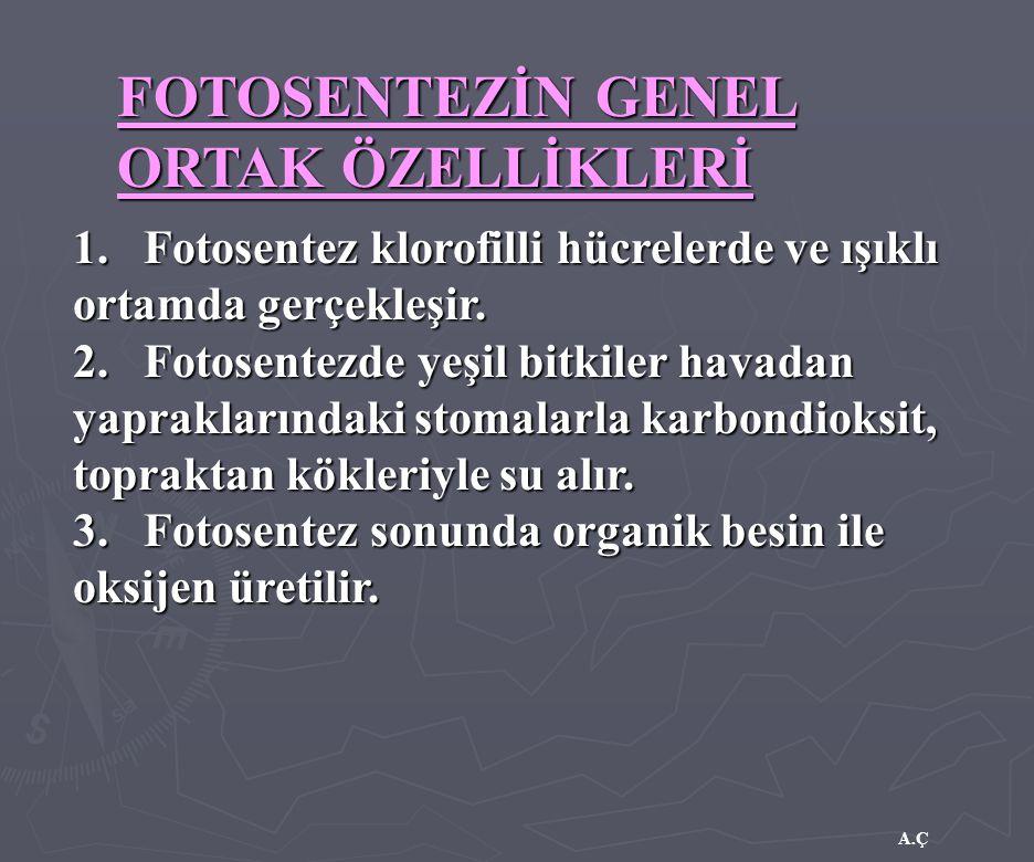 FOTOSENTEZİN GENEL ORTAK ÖZELLİKLERİ