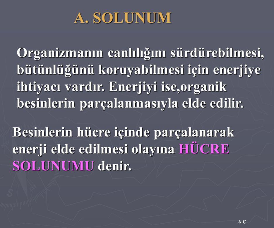 A. SOLUNUM