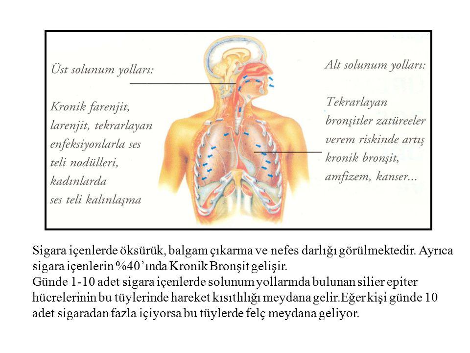 Sigara içenlerde öksürük, balgam çıkarma ve nefes darlığı görülmektedir. Ayrıca sigara içenlerin %40'ında Kronik Bronşit gelişir.