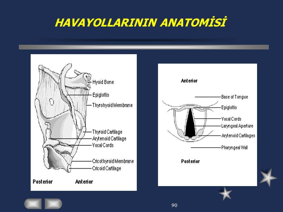 HAVAYOLLARININ ANATOMİSİ