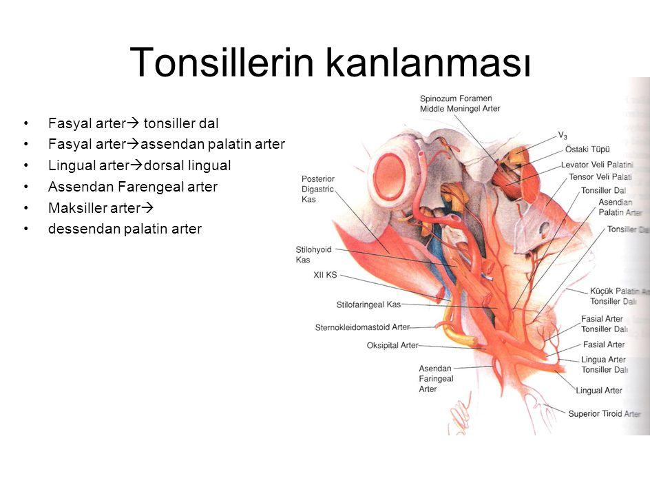 Tonsillerin kanlanması