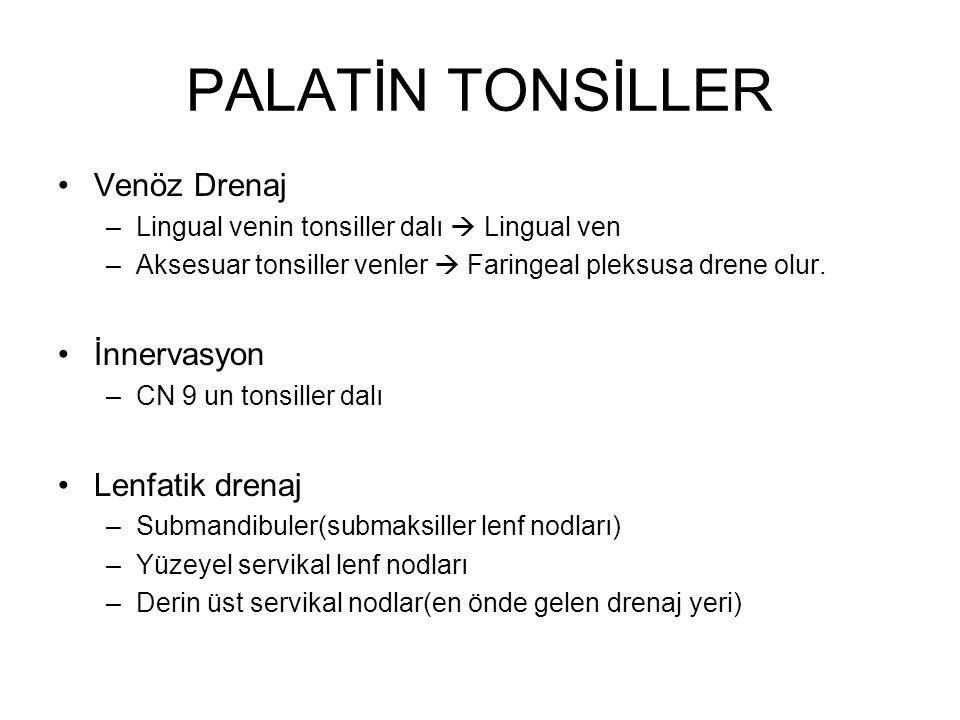 PALATİN TONSİLLER Venöz Drenaj İnnervasyon Lenfatik drenaj