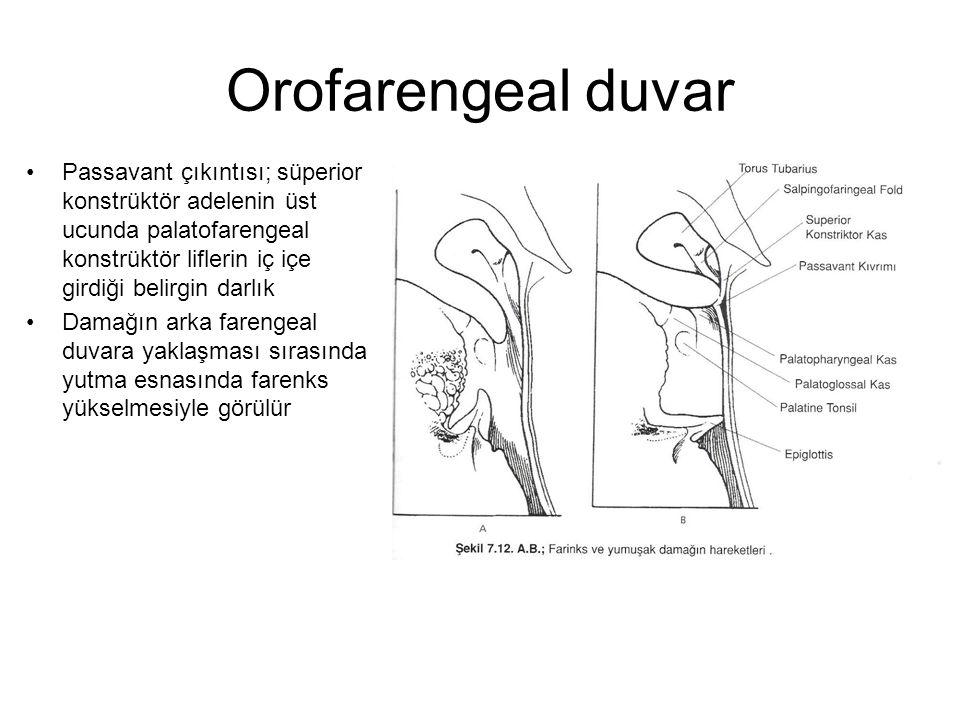 Orofarengeal duvar Passavant çıkıntısı; süperior konstrüktör adelenin üst ucunda palatofarengeal konstrüktör liflerin iç içe girdiği belirgin darlık.