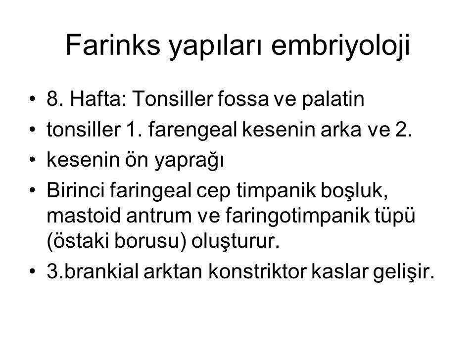 Farinks yapıları embriyoloji