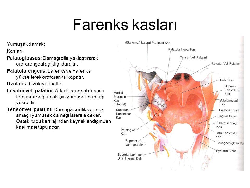 Farenks kasları Yumuşak damak; Kasları;