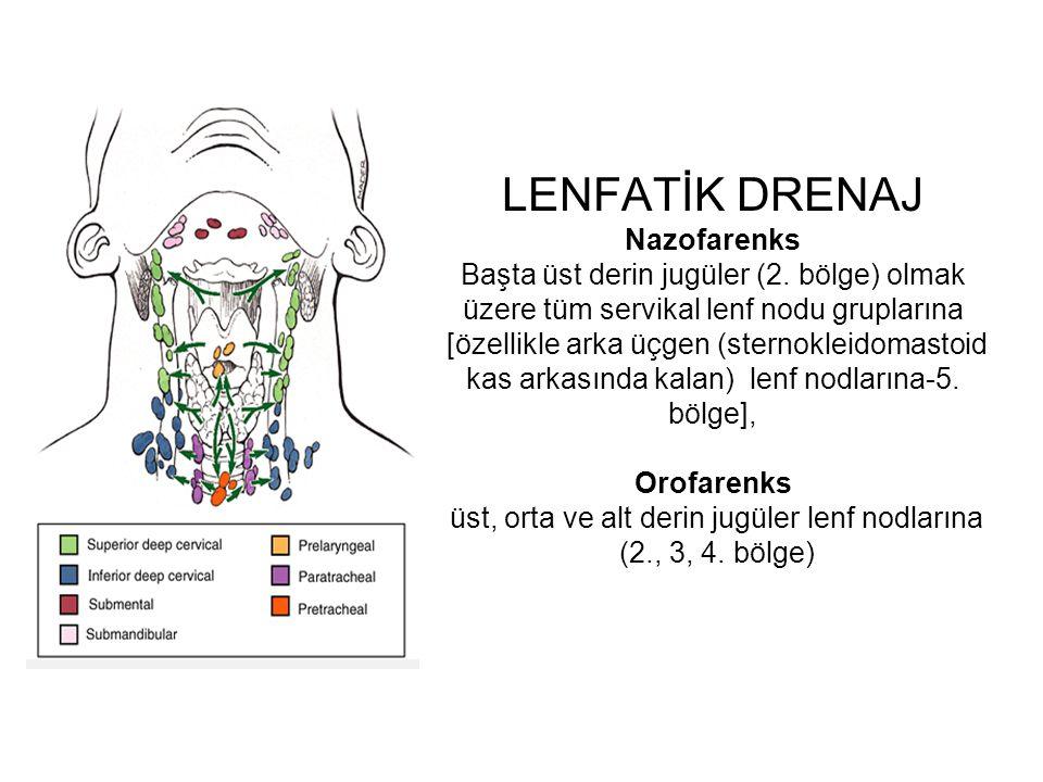 LENFATİK DRENAJ Nazofarenks Başta üst derin jugüler (2