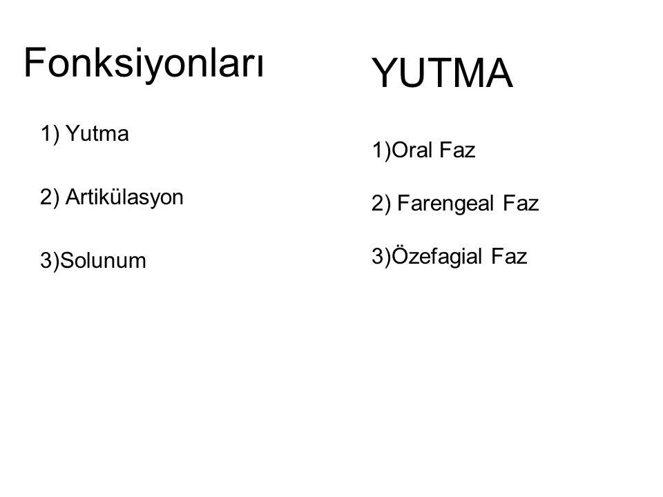 Fonksiyonları YUTMA 1)Oral Faz 1) Yutma 2) Artikülasyon 3)Solunum