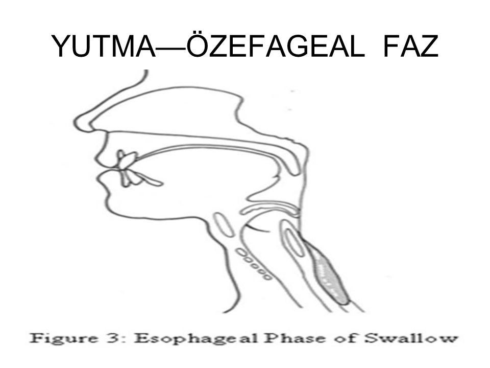 YUTMA—ÖZEFAGEAL FAZ Her 3 konstriktör faringeal kaslar kasılarak lokma özefagusa yönlendilirilir.