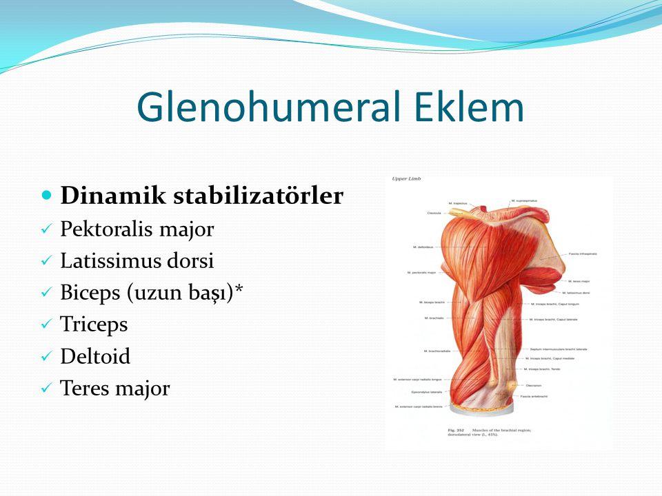 Glenohumeral Eklem Dinamik stabilizatörler Pektoralis major