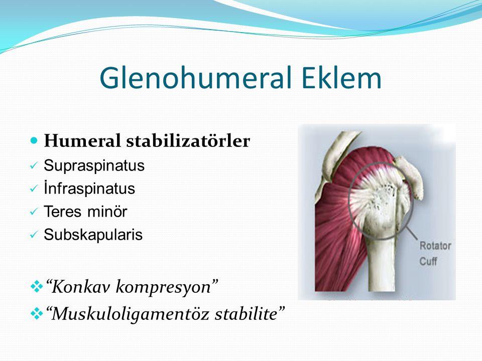 Glenohumeral Eklem Humeral stabilizatörler Konkav kompresyon